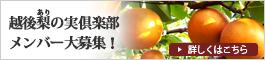 ヤマヨ果樹園応援団 越後梨の実(ありのみ)倶楽部